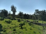 Quinta de Matamouros_21