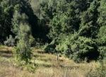 Santa Clara Valley3